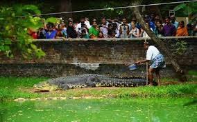 Inside Goa: Crocodile Spotting - Boat Trip - Before you visit Goa, visit Tripadvisor for the latest info and advice, visit Ajit Taxi for the latest info and advice, written for travellers by travellers.